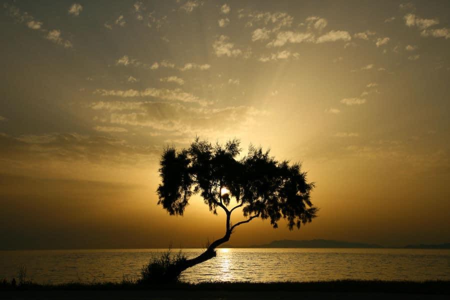 tree-of-light