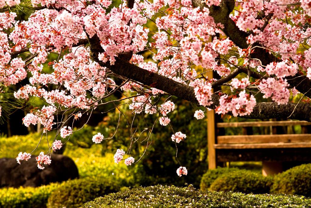 Znalezione obrazy dla zapytania house of sillage cherry garden