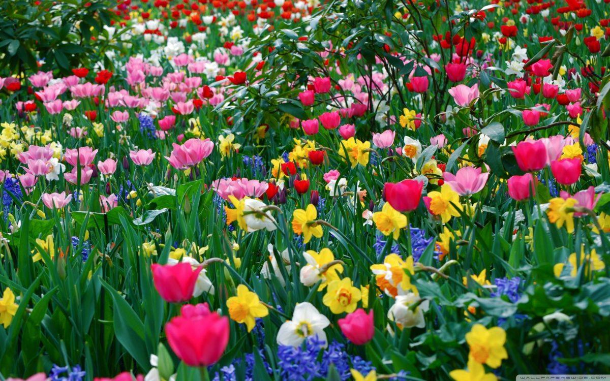 spring-flowers-wallpaperflower-wallpaper-background-hd-desktop-widescreen-for-mobile-liez1bhe
